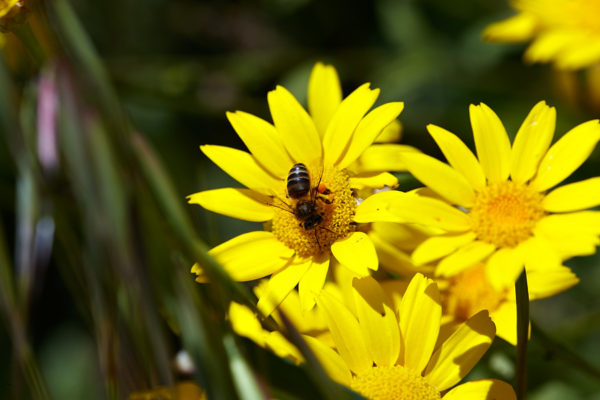Producción de miel de abejas en el Parque Natural Font Roja