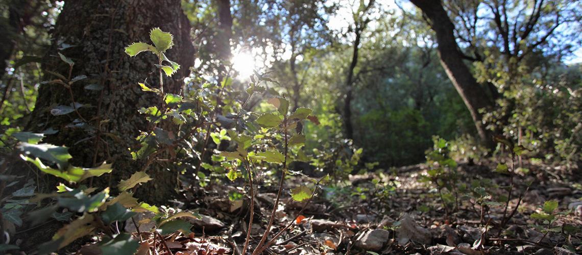 Bosque-mediterraneo-Alcoy